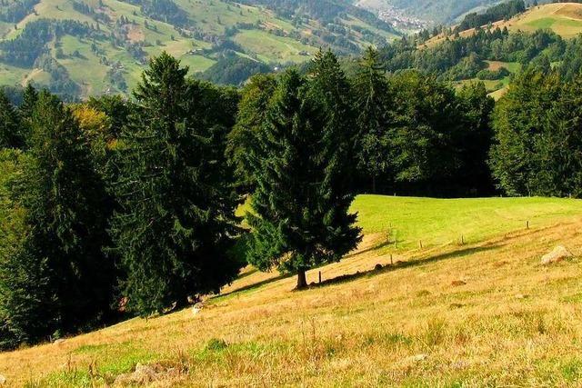 Der philosophische Blick eines Zehnjährigen auf das Münstertal