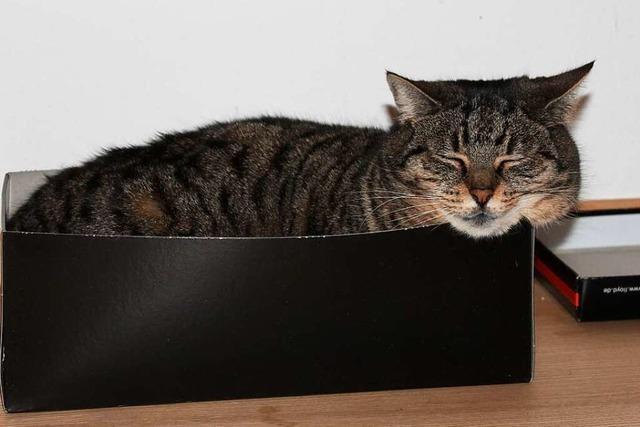Warum kriechen Katzen so gerne in Schachteln und Sofaritzen?