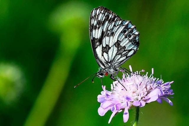 Mit einem neuen Pflegekonzept soll die Artenvielfalt erhöht werden