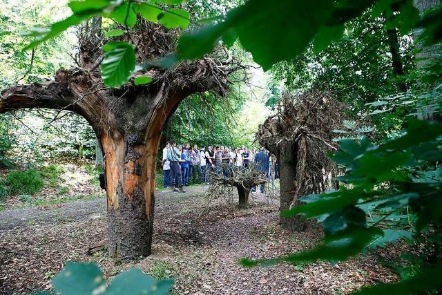 Der Walderlebnispfad