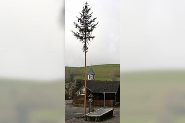Gersbacher Baum gekürzt