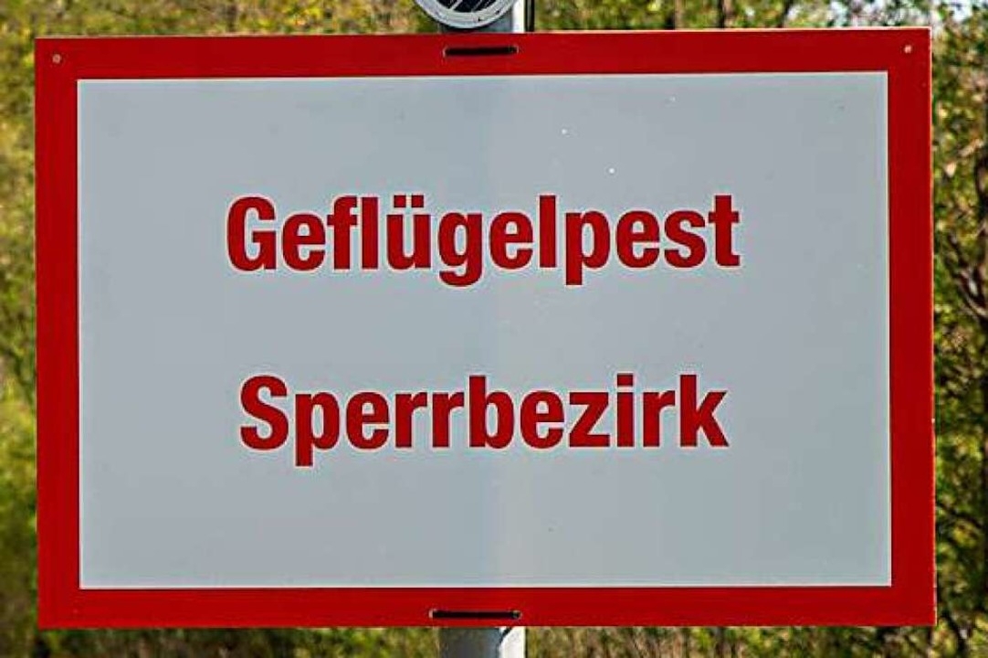 Wochenlang galten viele Gemeinden im L...aldshut als Geflügelpest-Sperrbezirke.    Foto: Hubert Gemmert