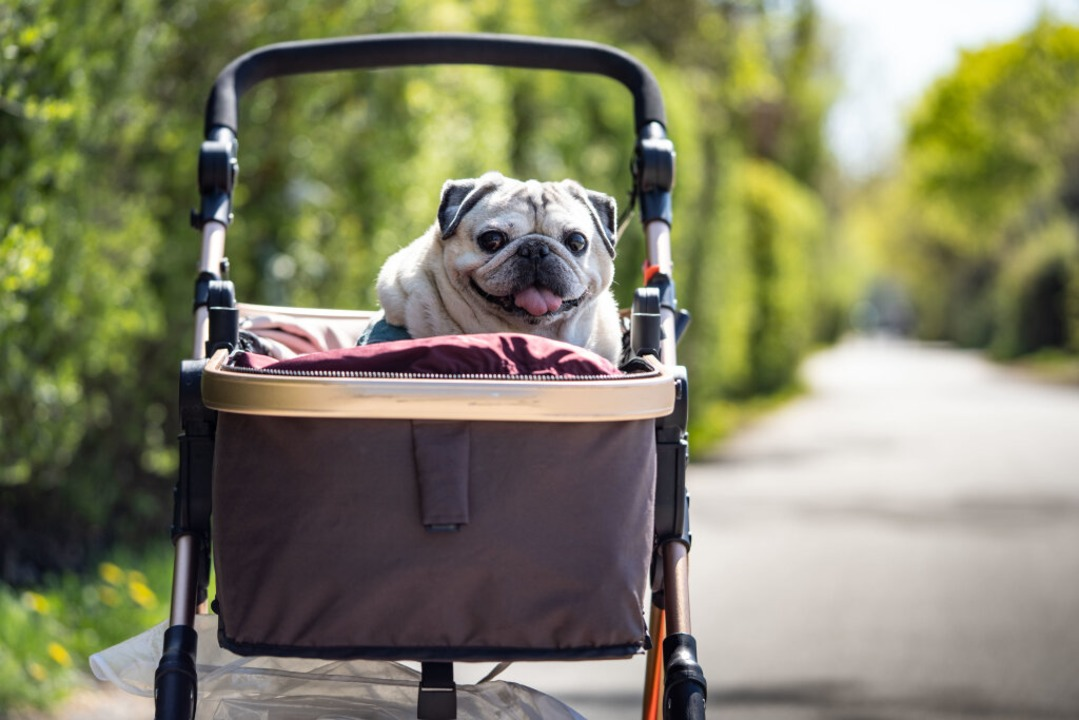 Nicht ohne meinen Hunde-Führerschein  | Foto: Frank Rumpenhorst (dpa)