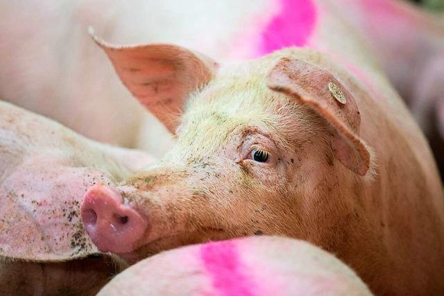 Fünf Cent pro Mahlzeit für eine bessere Tierhaltung