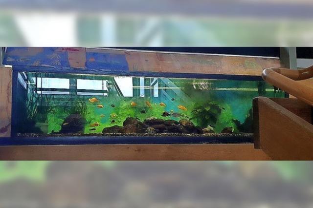 Eine neue Heimat für 50 Fische