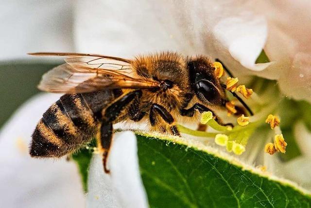 Das Summen der Bienen