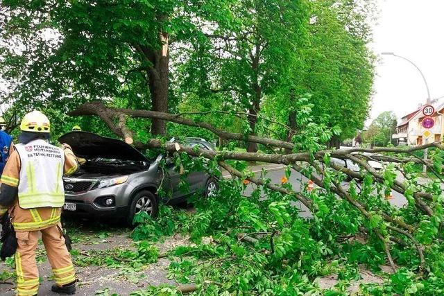 Baum stürzt in Heitersheim auf fahrendes Auto – Fahrerin leicht verletzt