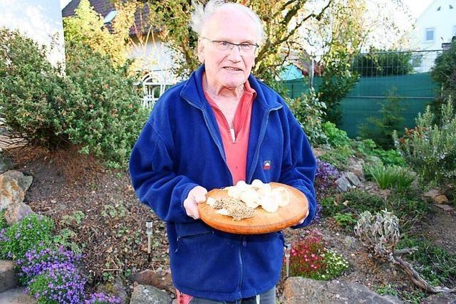 Ein Pilzsachverständiger aus Mahlberg-Orschweier ist derzeit ein gefragter Mann