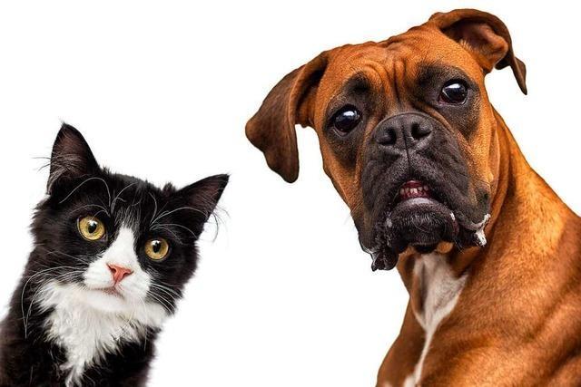 Es ist nicht erlaubt, das Halten von Haustieren generell in Mietverträgen zu verbieten