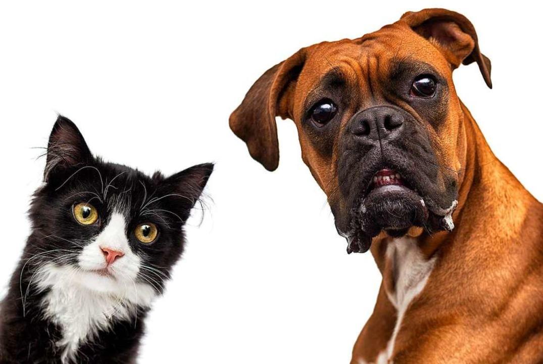 Gut für Katzen (links) und Hunde: Ein ...ot in Mietverträgen ist nicht zulässig  | Foto: Happy monkey