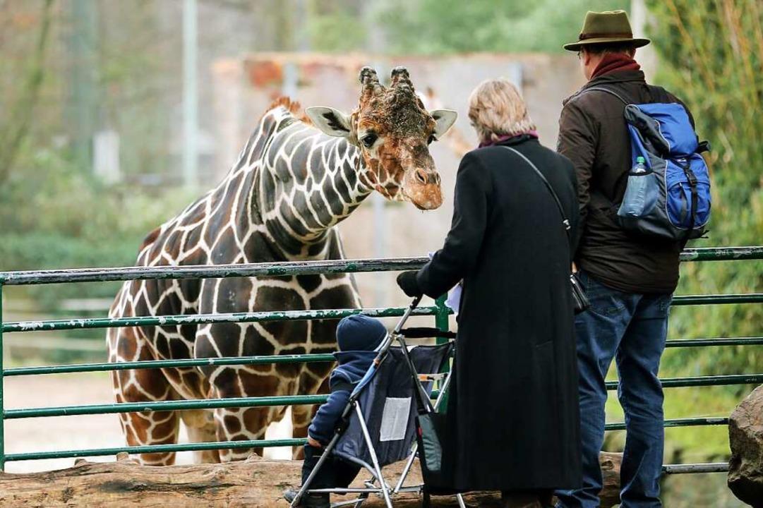 Auch Zoobesuche sind für Genesene möglich.  | Foto: Roland Weihrauch