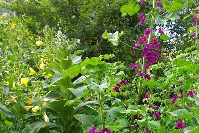 Mitmach-Garten in Waldkirch lädt freitags zum offenen Gärtnern ein