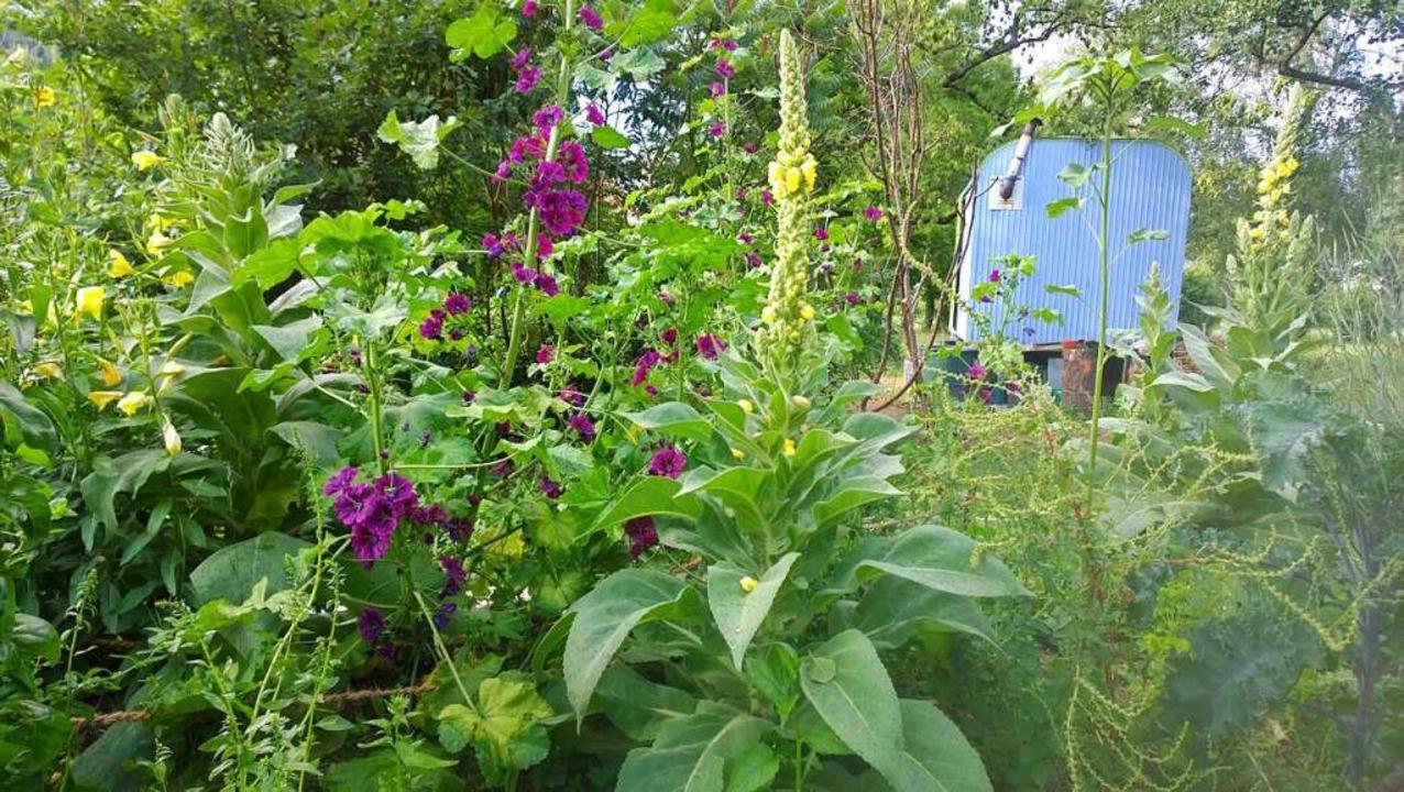 Bald wird es im Mitmach-Garten wieder kräftig wachsen und blühen.    Foto: Stadt Waldkirch