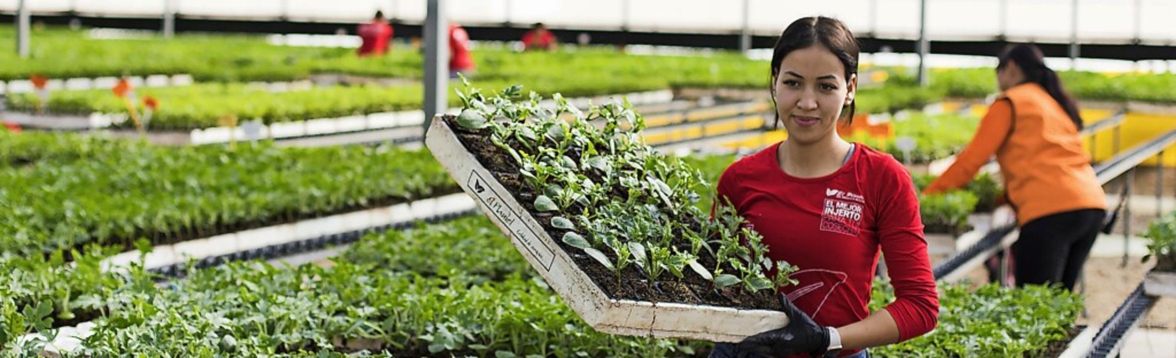 Den Lieferantinnen von Lebensmitteln soll das neue Gesetz den Rücken stärken.     Foto: Curro Vallejo (dpa)