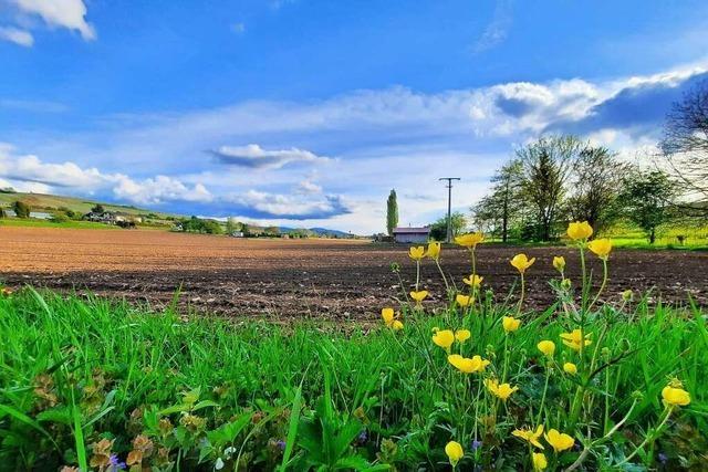 Entsteht in Pfaffenweiler ein neues Baugebiet am Ortsrand?
