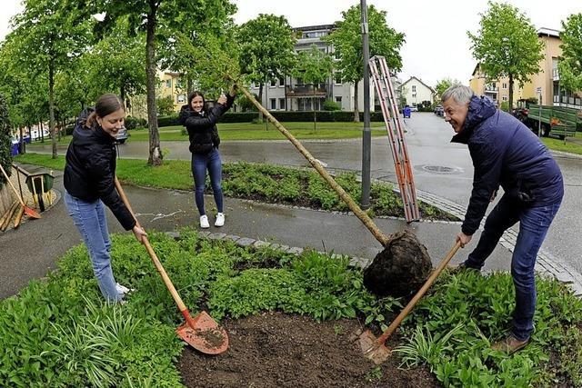 Eine Baumhasel für die Kastanienallee