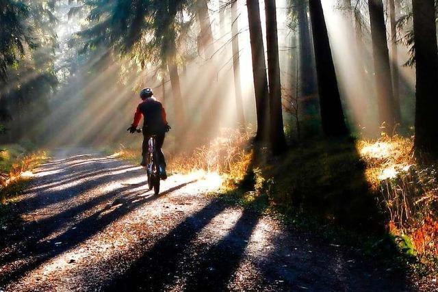 Mountainbiker und Wanderer – auf der Suche nach der Harmonie im Wald