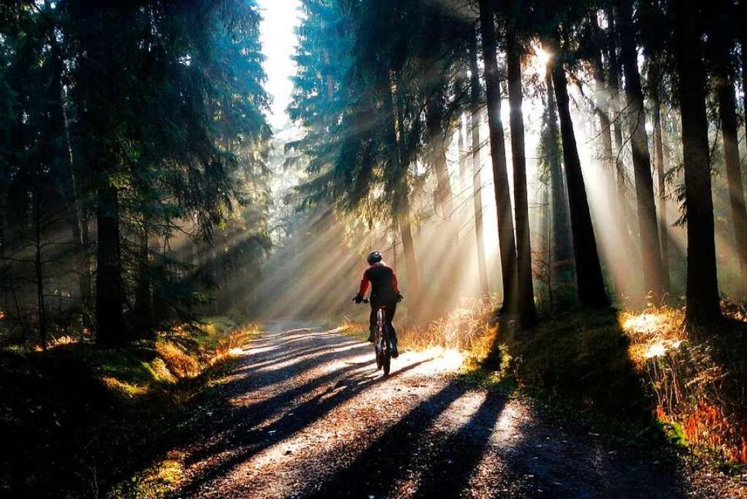 Mountainbiken im Wald kann zum Genuss  werden, aber auch Stress verursachen.  | Foto: Arno Burgi