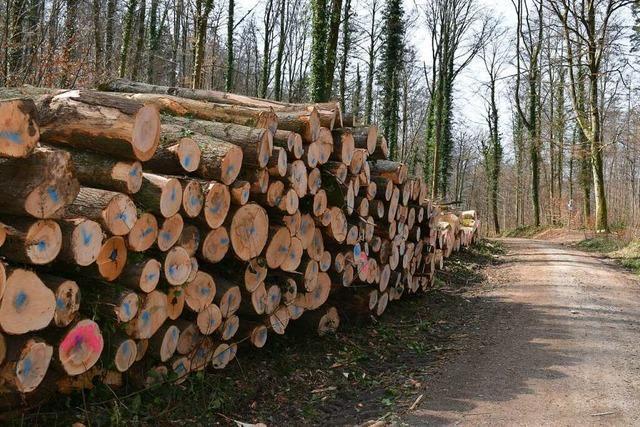 Lörracher Grüne wollen Umdenken beim Umgang mit dem Forst