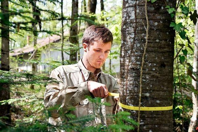 In den Wäldern werden gerade Daten gesammelt – auch im Landkreis