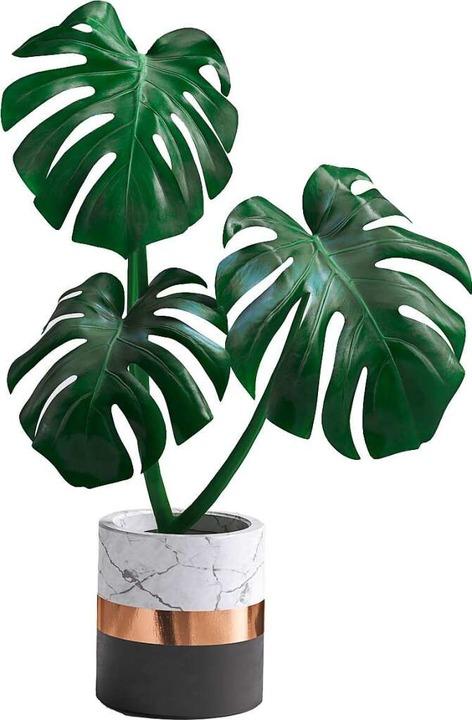 Die Monstera-Kletterpflanze stammt ursprünglich aus Südamerika.  | Foto: vpanteon (stock.adobe.com)