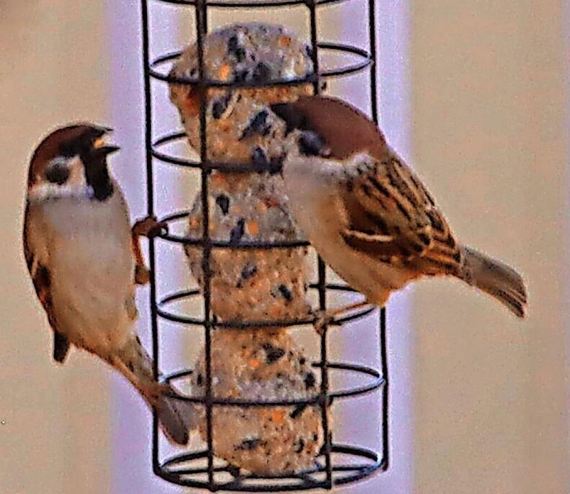 Bei der Vogelfütterung gilt es, einige Regeln zu beachten.   | Foto: Dorothée Kuhlmann