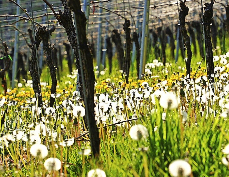 Der Frühling kommt doch! Es blüht im W...rg, fotografiert von  Thorolf Clemens.  | Foto: Thorolf Clemens