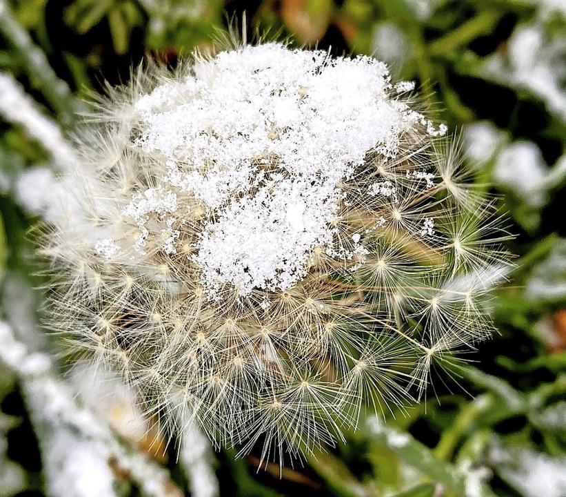 Pflanze in March mit einer kleinen  Sc...tografiert von Marie-Christine Poulet.  | Foto: Marie-Christine Poulet