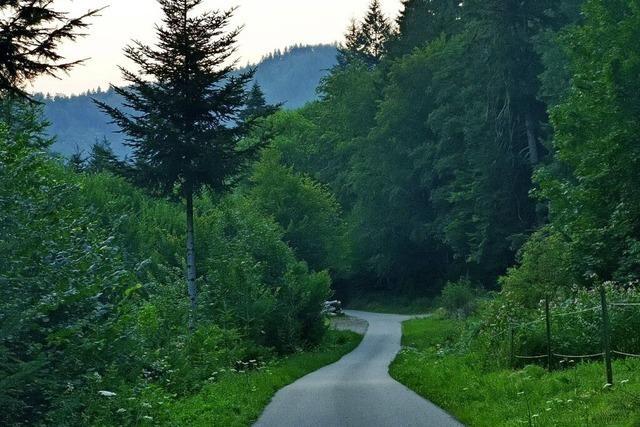 Neue Hofzufahrten und Wege im Wald