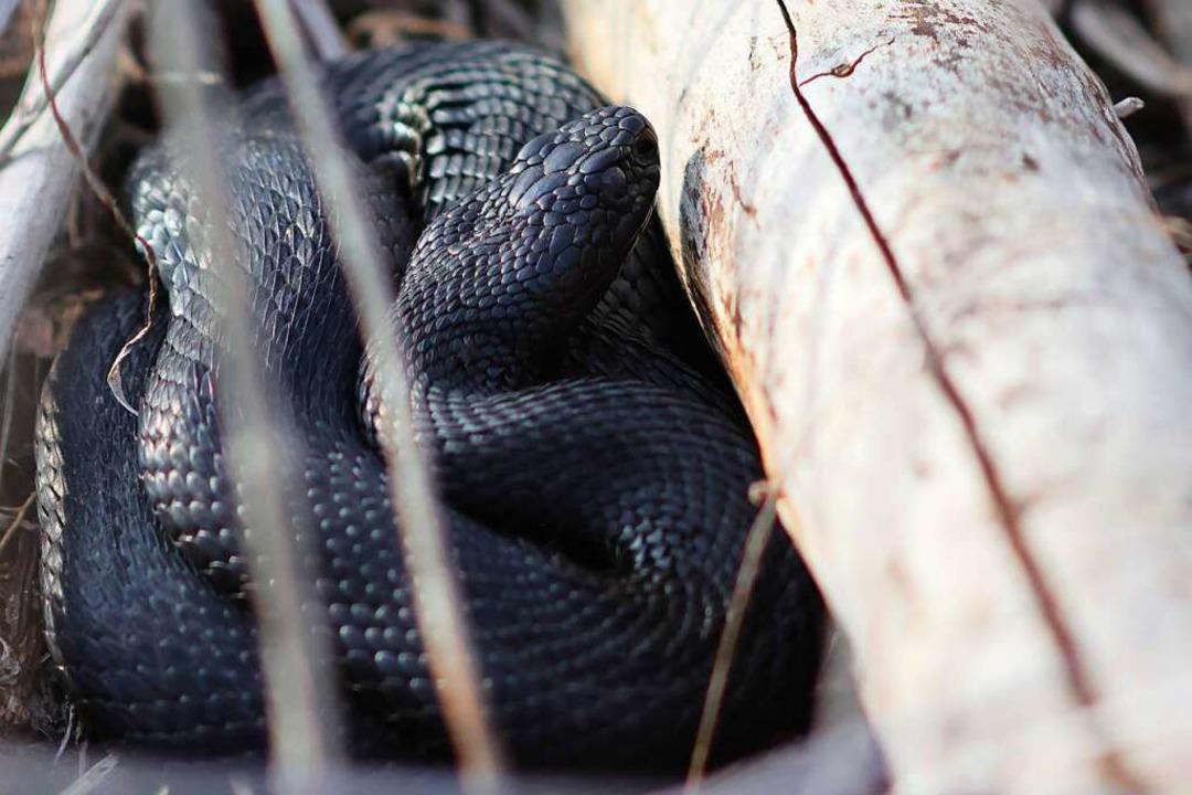 Diese Schlange hat Stephan Kuppig entdeckt.  | Foto: Eva Korinth