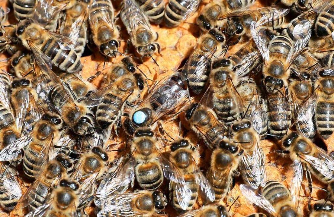 Für die Bienen war es zu kalt.    Foto: Bernd Wüstneck (dpa)