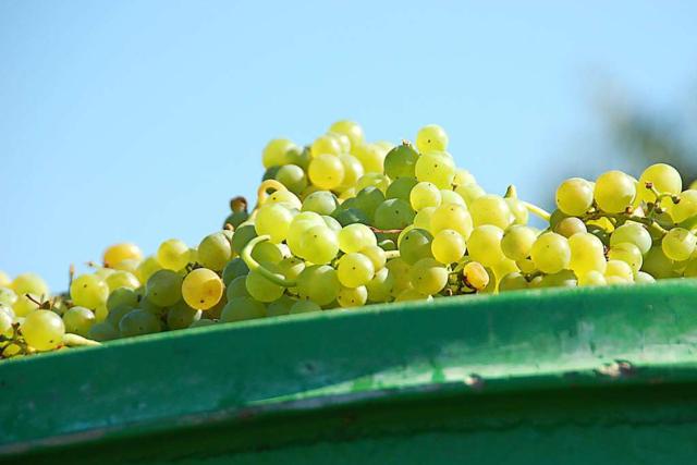 BZ-Serie: Die junge Weinszene der Ortenau