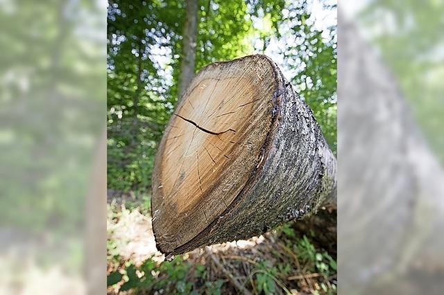 Für Stadtteil Dietenbach 3000 Bäume fällen