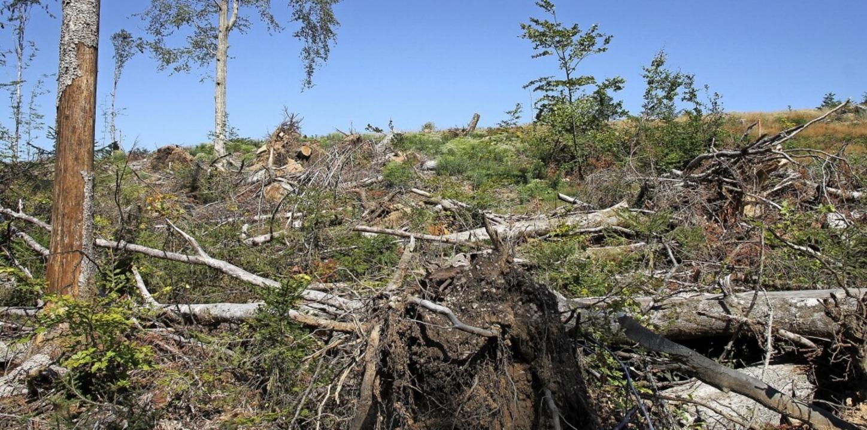 Vor der Neupflanzung ist erst einmal eine gründliche Aufräumaktion erforderlich.  | Foto: suedkurier