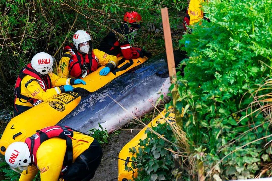 Dramatische Aktion für einen Wal im Sü...ielleicht nicht mehr gerettet werden.   | Foto: Yui Mok (dpa)