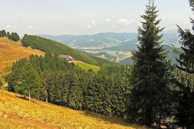 Bei dieser Wanderung von Hinterzarten nach Kirchzarten gibt es ganz viel Schwarzwald auf einmal