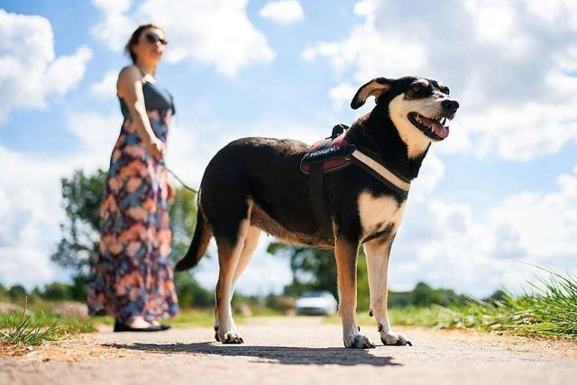 Infoblatt soll Konflikte rund um Hundehaltung vermeiden helfen