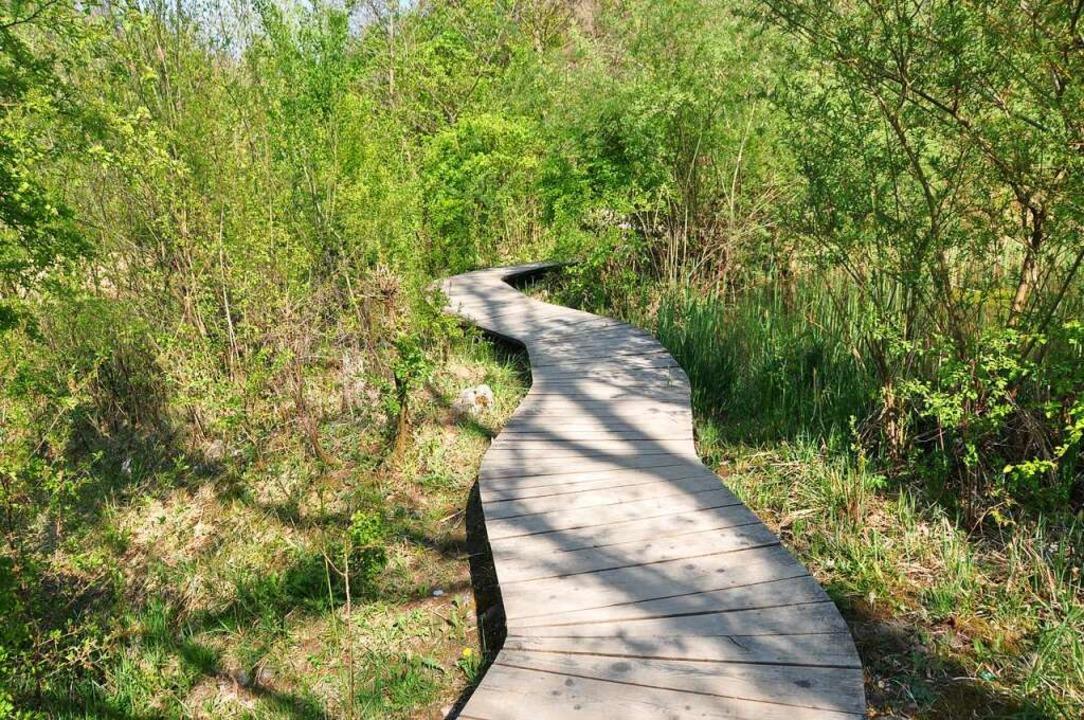 Das Naturreservat Autal in Riehen    Foto: Daniel Gramespacher