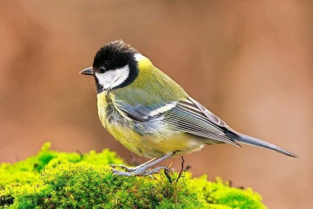 Am Wochenende ruft der Nabu zum Vögel zählen auf