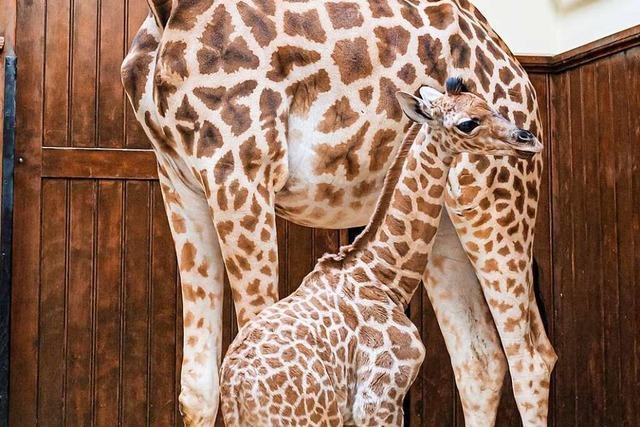 Basler Zoo erhält 2020 mehr als 29 Millionen Franken aus Spenden und Nachlässen