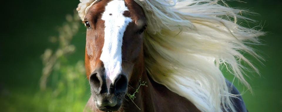 Korso von Corona-Gegnern scheucht Pferde in Glottertal auf