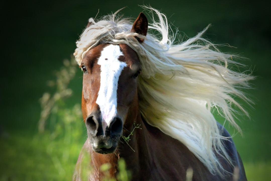 Pferde mögen keinen Lärm. (Symbolbild)  | Foto: Wolfgang Scheu