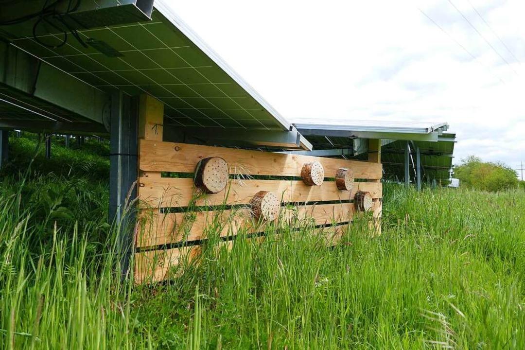 Neu: die Insektenhotels unter Modulen  | Foto: Dora Schöls