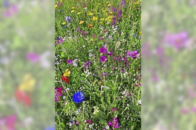 Blühwiesen im Ort als Beitrag gegen Artenschwund