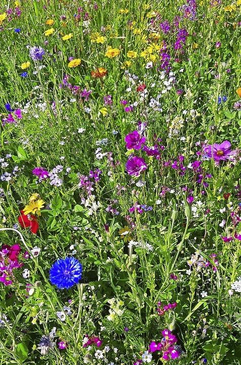 Nicht nur für die Natur toll, sondern ...Auge: Blütenvielfalt auf einer Wiese.   | Foto: Privat