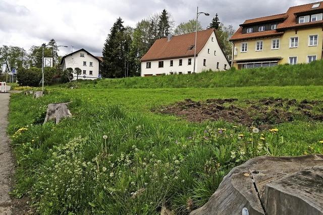 Naturparkschule legt Blühflächen auf ungenutztem Grundstück an
