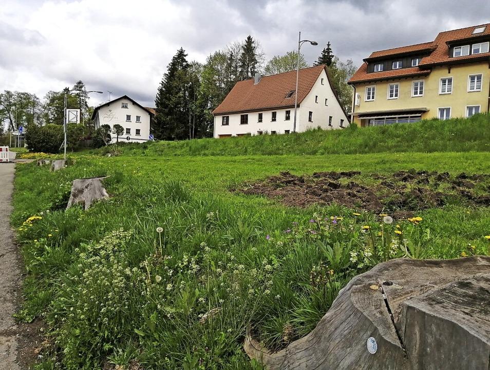 Auf diesem bislang ungenutzten Privatg...chwarzwaldverein Blühflächen anlegen.     Foto: Juliane Kühnemund