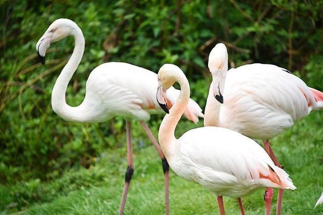 Vogelpark in Steinen ist wieder geöffnet – wie geht es den Besitzern?