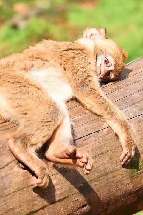Lass mich, ich bin müde!  | Foto: Robert Bergmann