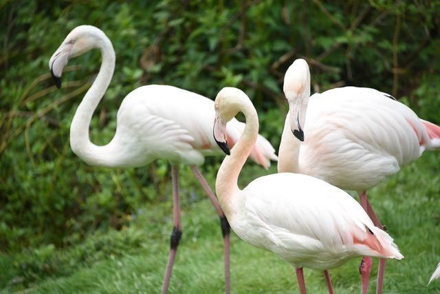 Der Vogelpark ist wieder geöffnet - wie geht es den Besitzern?